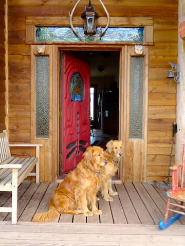 Zacc and Teddie welcome our guests... come in and look around we hope you like it here....
