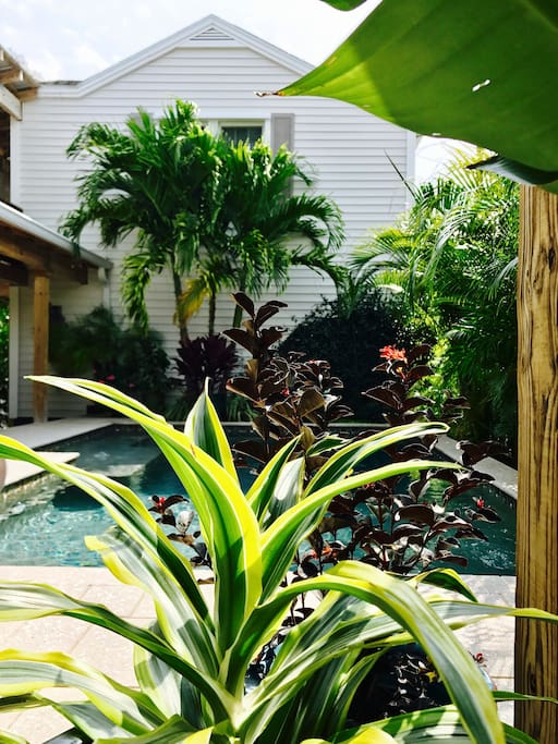 A relaxing, tropical, secluded and meditative space for the discriminating traveler.