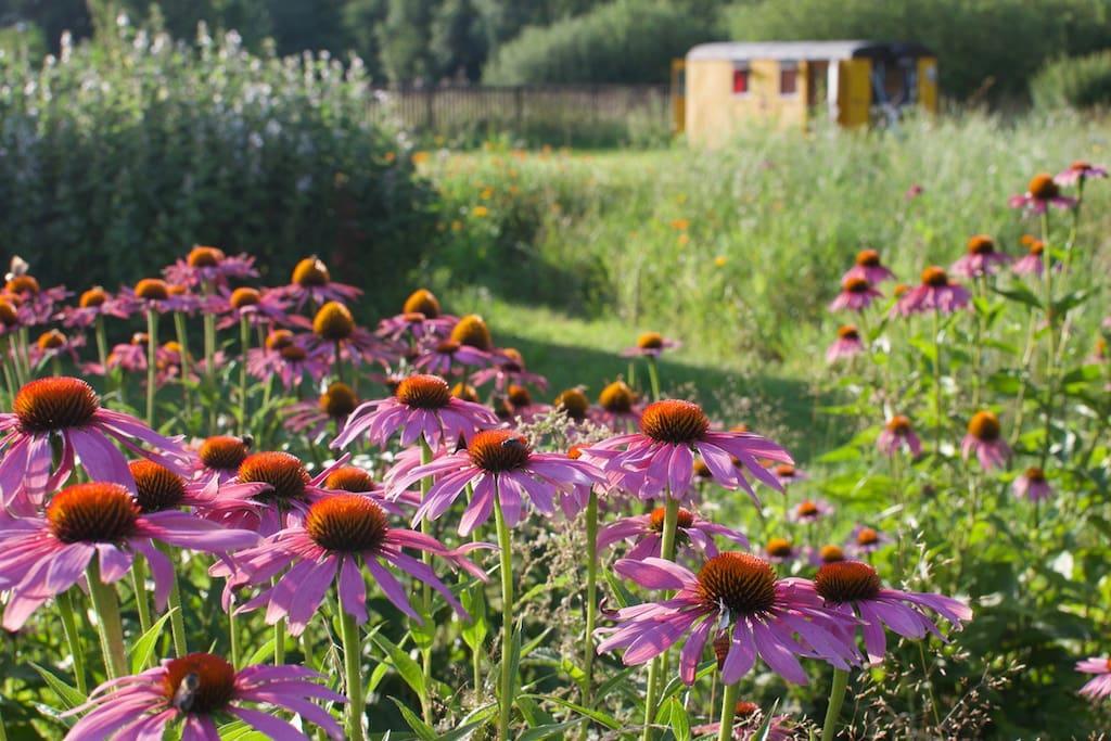 bylinná zahrada