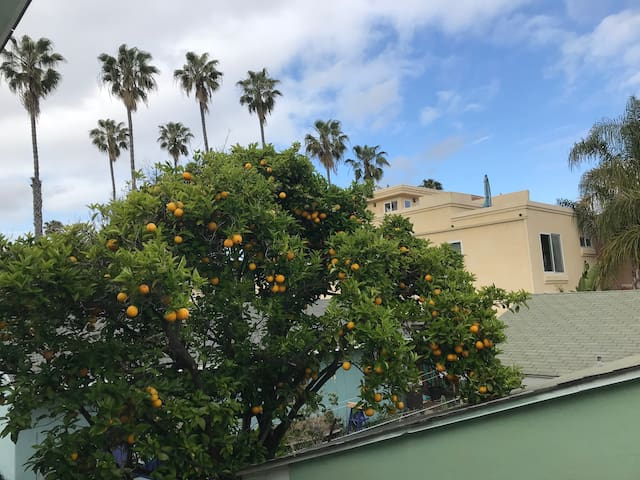 North PB Apartment: Orange Tree and Sunsets