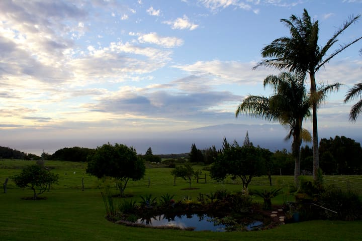 This is taken from the front yard by our Zen Pond at Sunset....