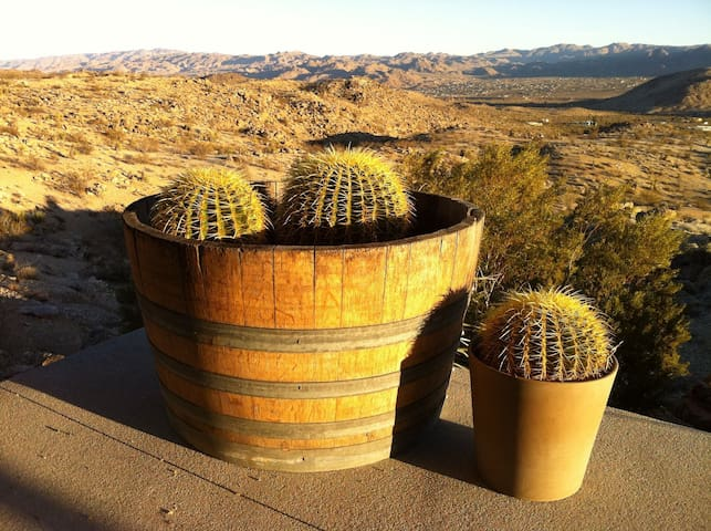 Barrel cactii in a barrel
