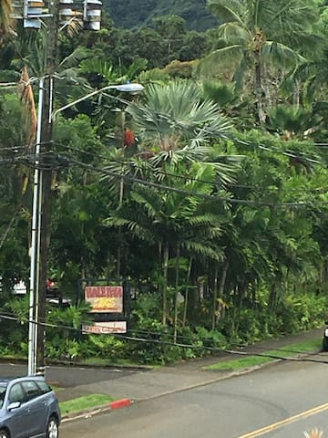 Tropical Oasis in Beautiful Haiku Kaneohe