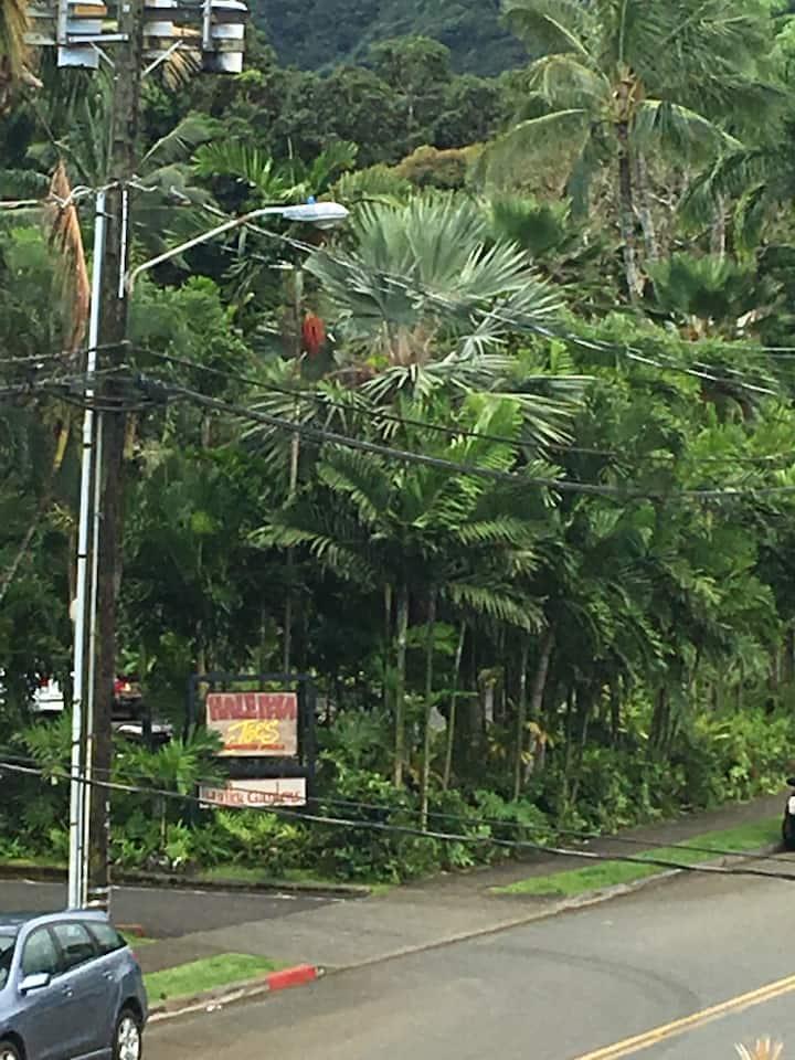 Tropical Oasis in Beautiful Haiku Kaneohe
