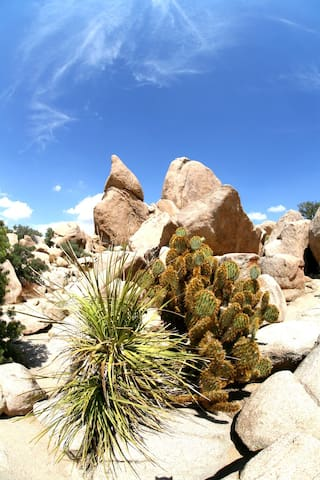 Our favorite hike in Joshua Tree Park - Hidden Valley