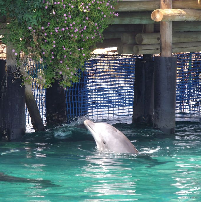 The beautiful Dolphin Reef