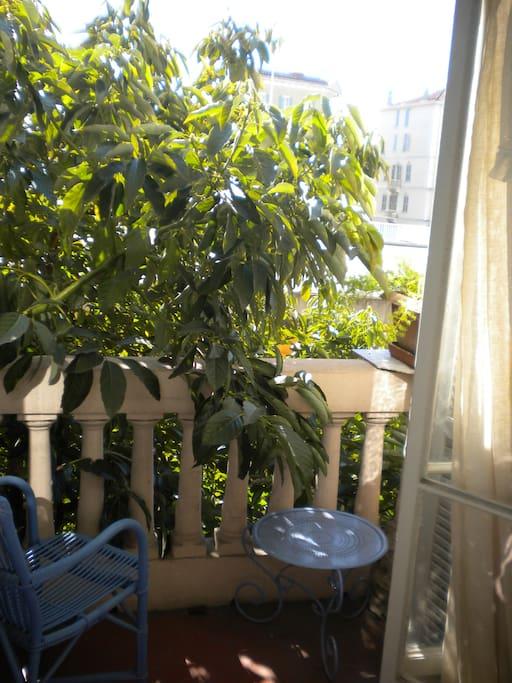 « Chambre romantique »  l'avocatier à l'assaut du balcon