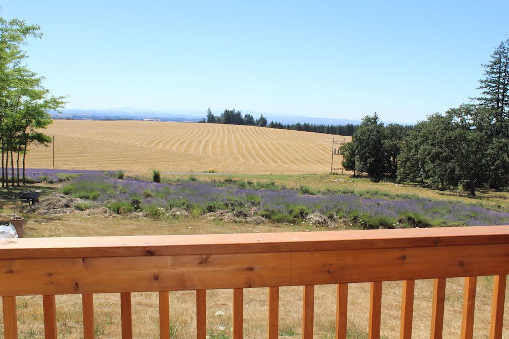 View from the attached porch