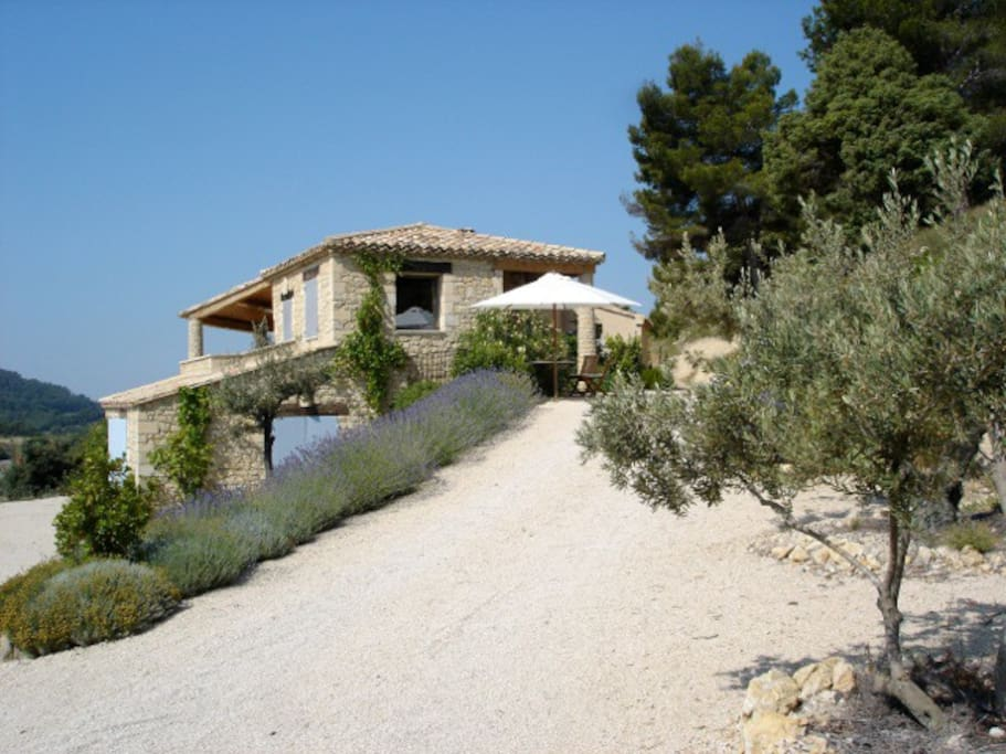 The house in surrounded by Olive trees and Lavender