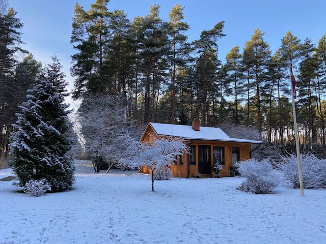 Cozy house in Pine forest