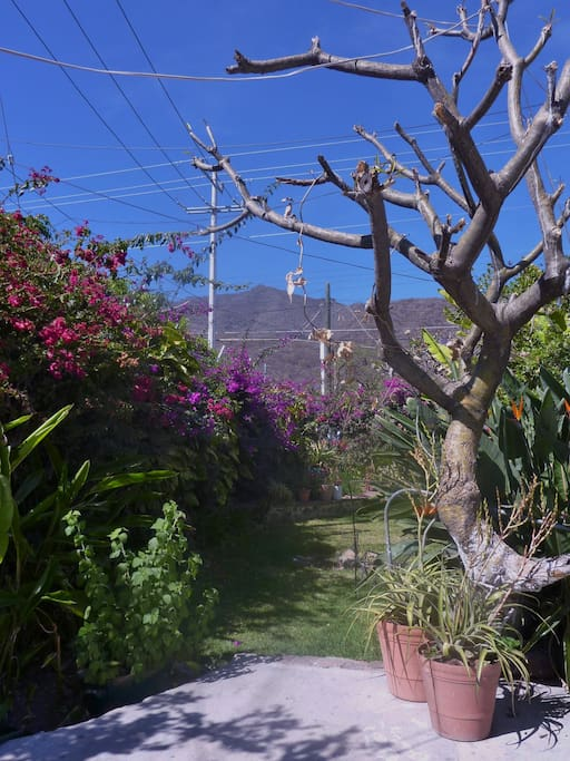 Mountain view from garden