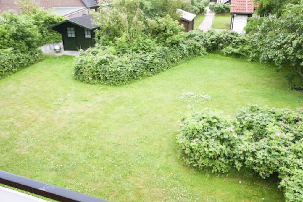 Blick in den Garten vom Balkon Garten gehört zu den unteren Wohnungen