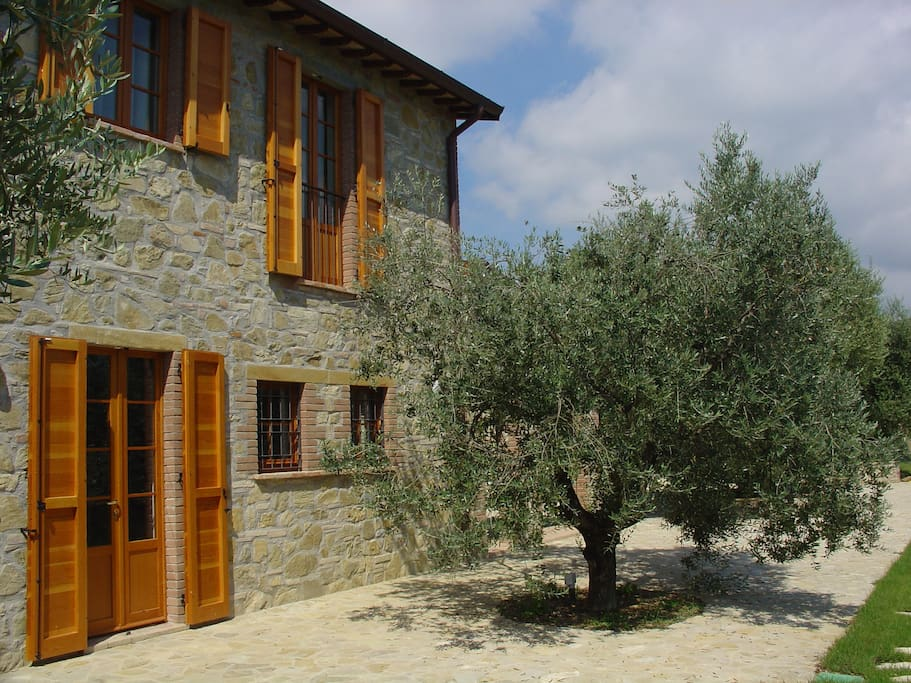 Large olive trees on the front of the house