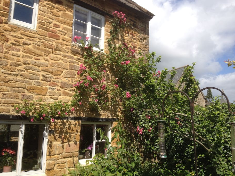 Back of cottage with climbing rose