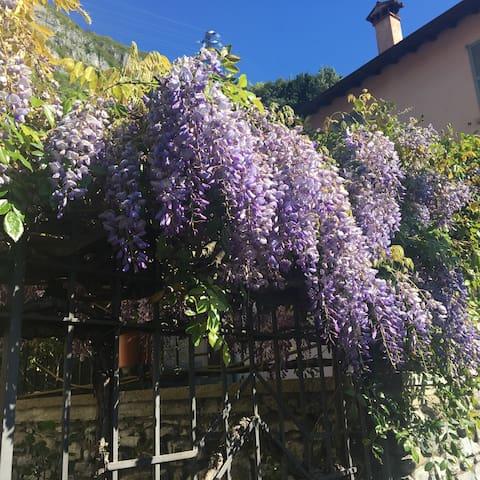La Casa del Glicine...less than on Km from Varenna