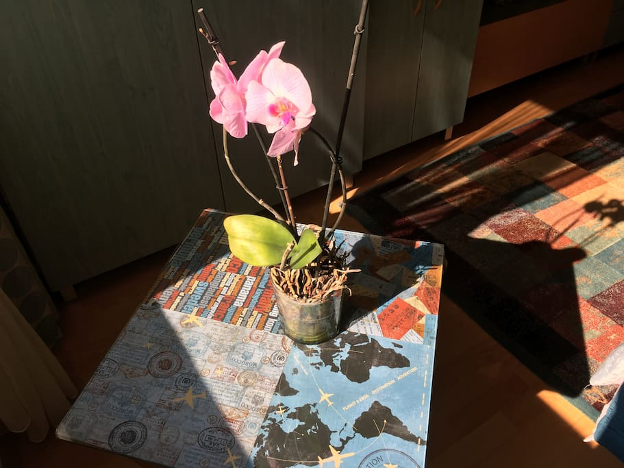 My traveler coffee table