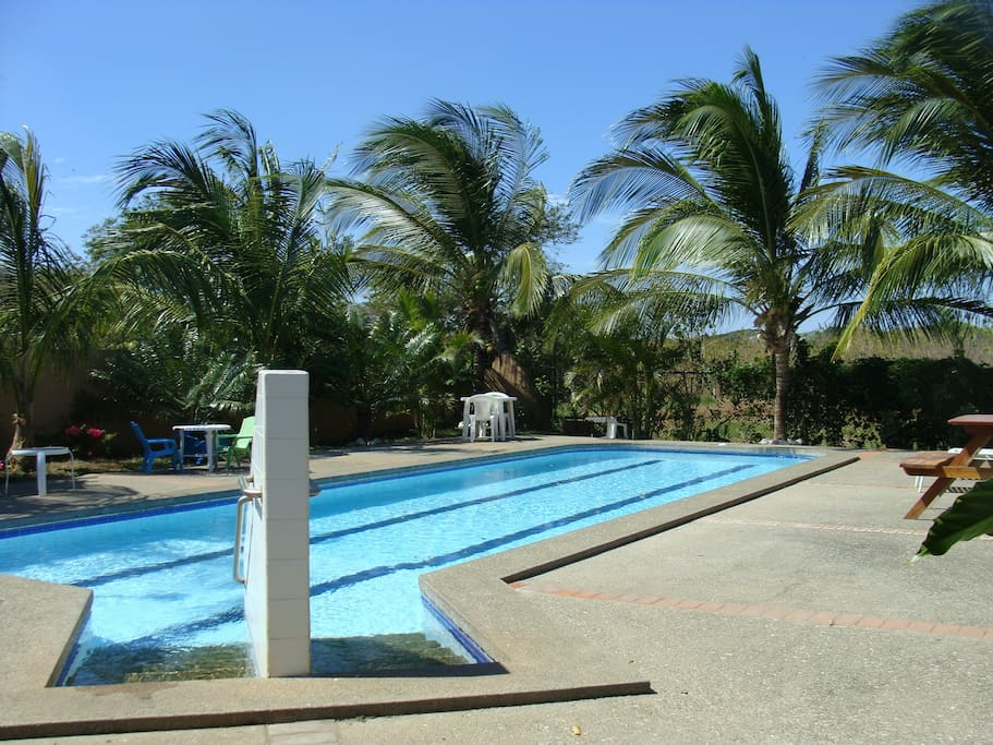 Our lovely pool surrounded by palm trees