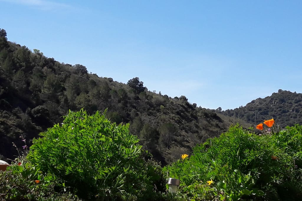 vista frontal Bosc de la Vila