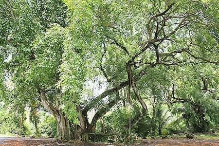 Ben Deloraine Nature Reserve, Point Radix, Mayaro - Mayaro - Doğa içinde pansiyon