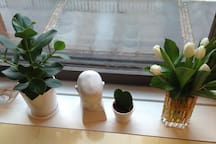 Famous compositor Sibelius on the window sill keeping you company;)