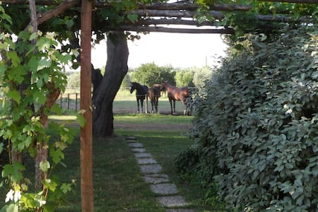 Lovely double room in a farm - Magliano In Toscana - Bed & Breakfast