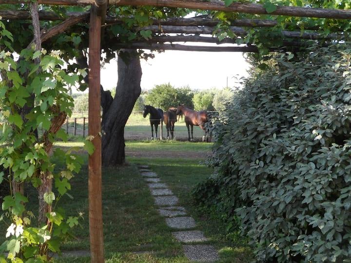 Tuscany between horses, green hills, and sea R