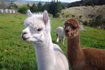Twin room @ Grant and sue's Alpacas - Kerikeri