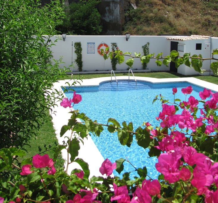 Communal pool and garden