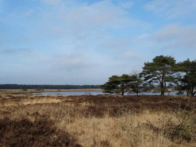 Bungalow in bossen van Drenthe