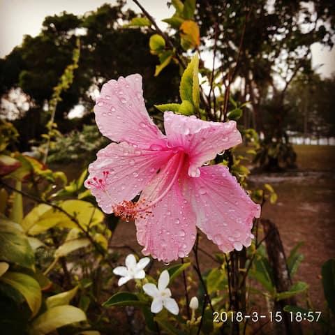 Summerland Seaside Chalet, Terengganu, Malaysia