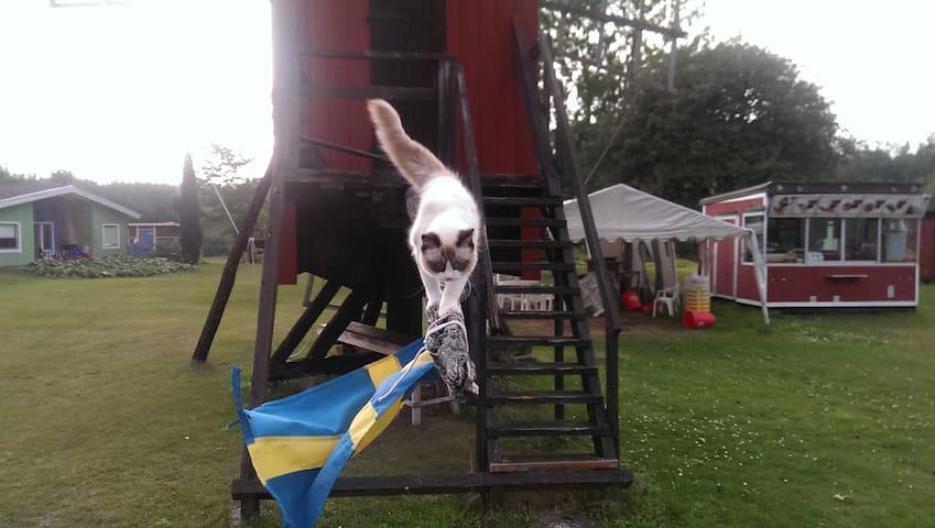 Hus katten Svante!