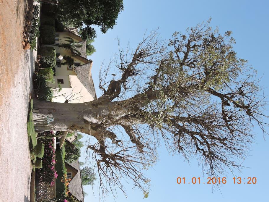 derriére le baobab!!!