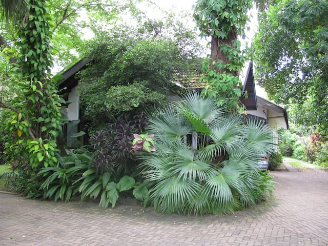 An oasis in the city - Panadura - Ev