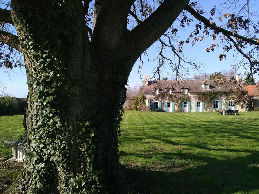 Oak tree in the garden with tables and chairs for a picnic