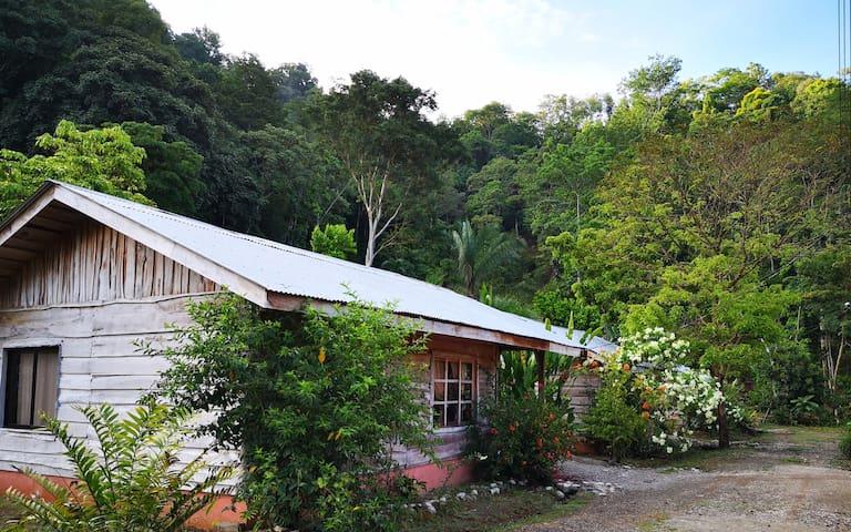 Rain Forest Dream: Heliconia Cabin