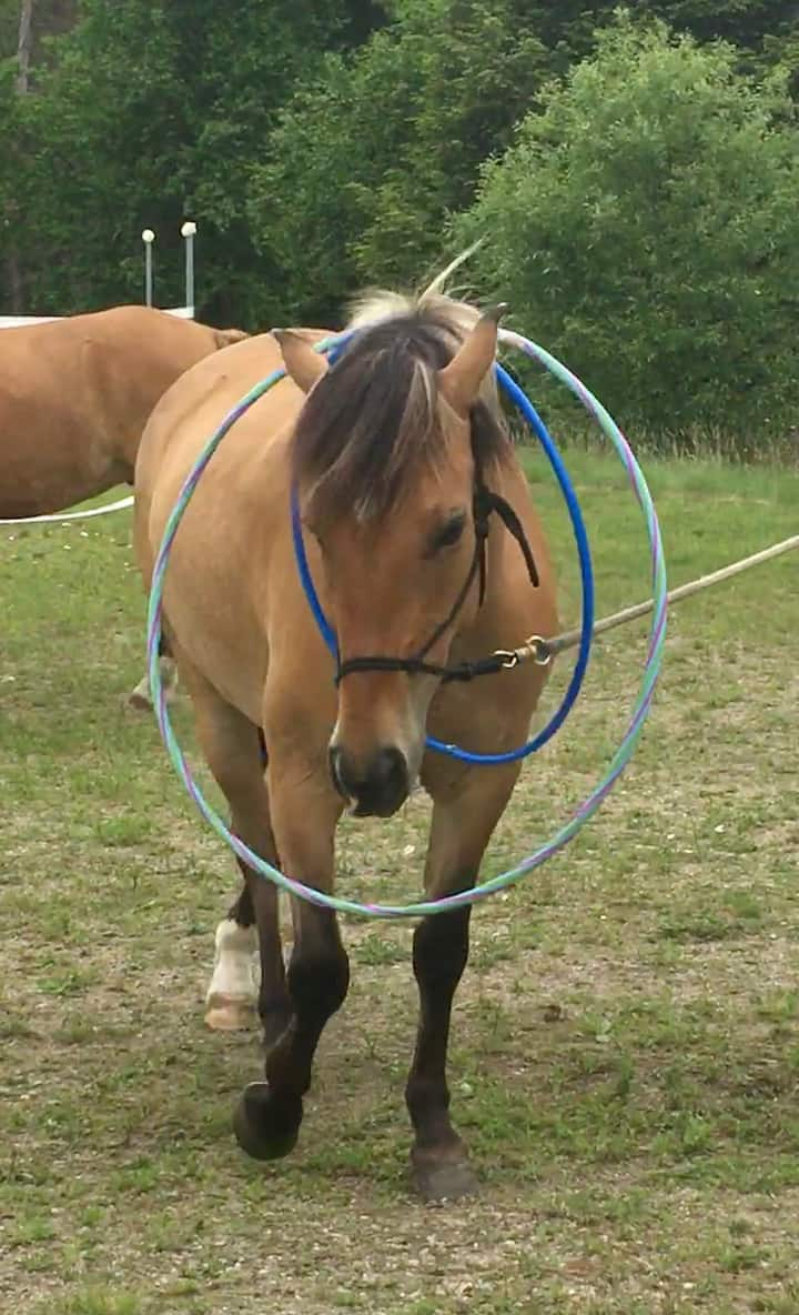 """Hula hoops aren't scary"" says Maple."