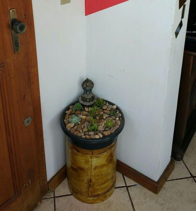 Entrada - jardim de suculentas