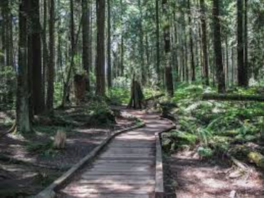 Pacific Spirit Park trails nearby