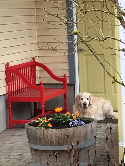 Bodhi is ready to welcome guests.