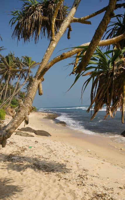 ...and this is just 50 meters away, untouched beaches including Madiha Surf Point and other Reefbreaks.