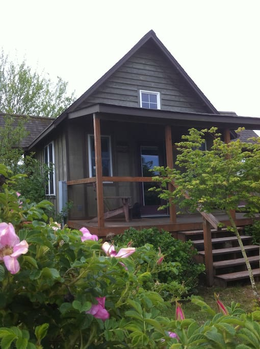 Rog's Retreat when the rugosa roses are in bloom