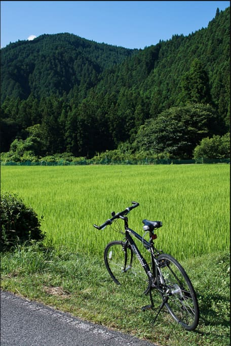 rent a bike and ride to green rice fields