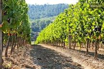 a vineyard close by