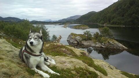 Erlebe Norwegen auf Dønna an der Helgelandsküste