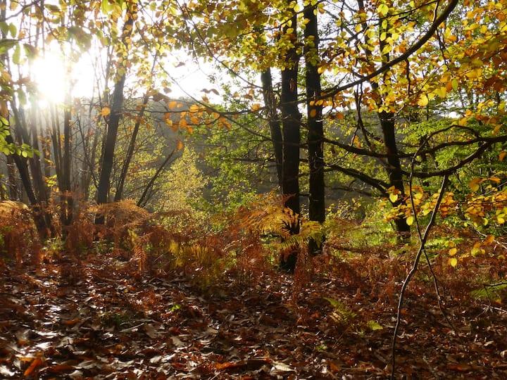 espace de méditation e forêt