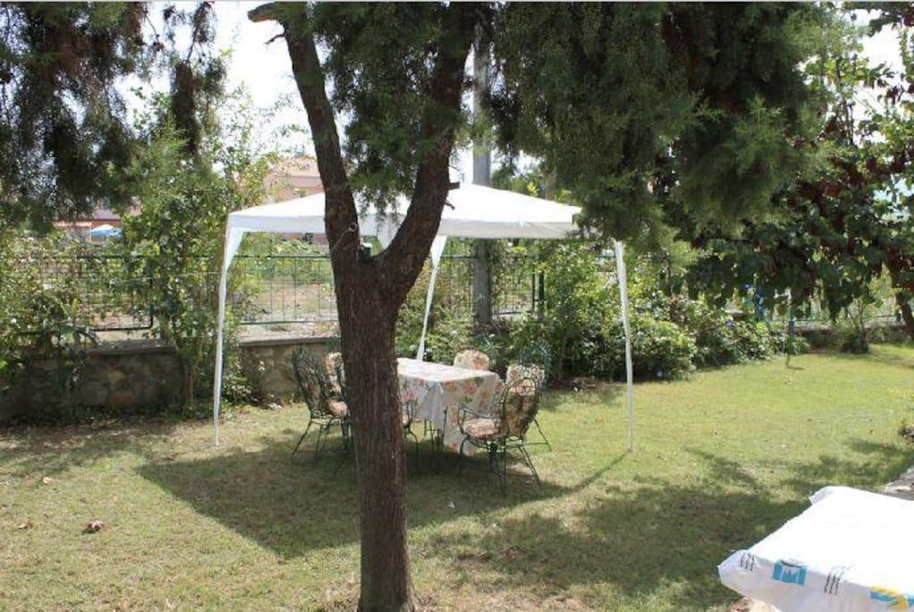 Bahçeden bir kare  çok geniş ve serin karşı tarafı kapanmaz günlük ağaçları vardır.