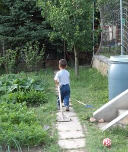 tomatoes,relax,sunshine,garden - Biatorbágy