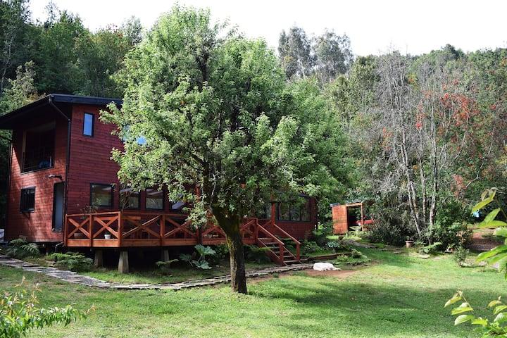 Habitación en Selva Valdiviana.