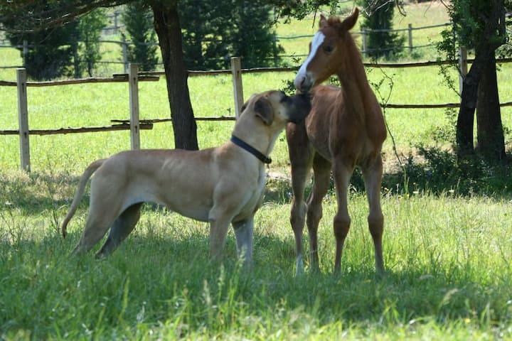 """La Posada del Cavallo """"in summer"""""""