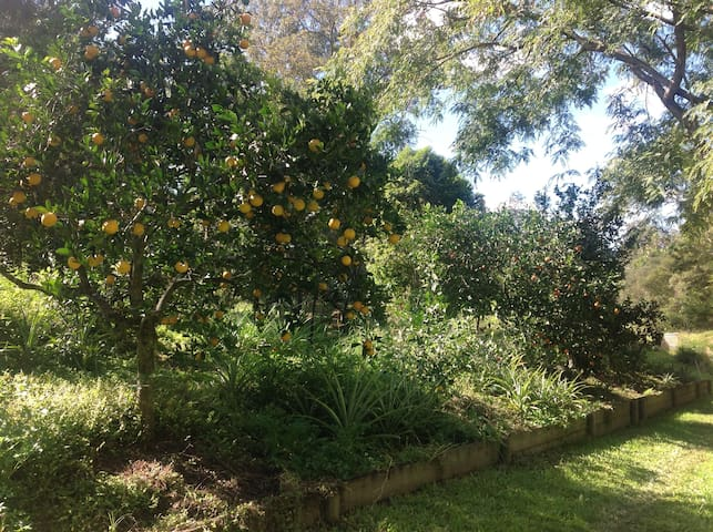 Around the property- lemon, mandarin, and tangelo trees